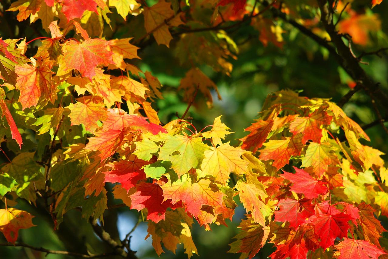 Autumn 209479 1280
