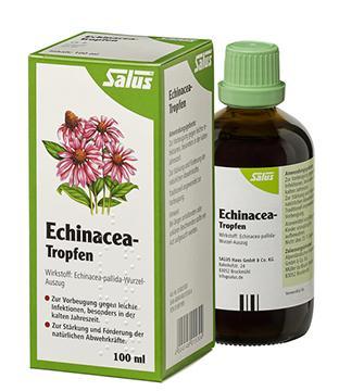 Echinacee
