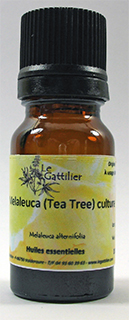 Melaeuca alternifolia