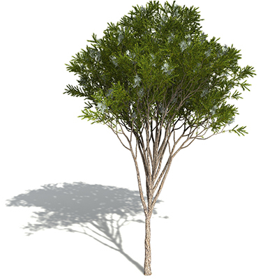 tea-tree-2-1.jpg